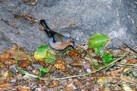 colorized: Beautiful colorized chaffinch close-up view, summer park Stock Photo