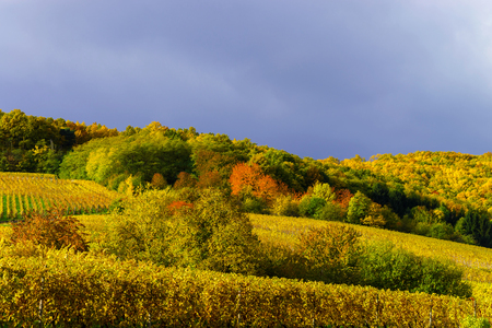 vinery: Vivid colors of autumn vineyards in Andlau, Alsace. Contrast colorful weather. Season concept. Stock Photo