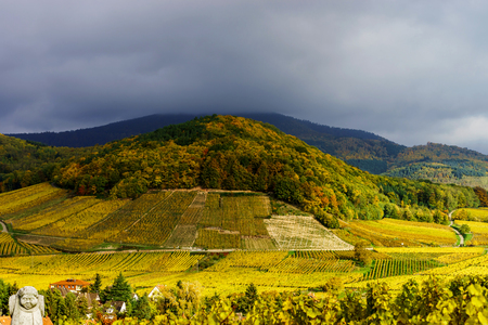 andlau: Vivid colors of autumn vineyards in Andlau, Alsace. Contrast colorful weather. Season concept. Stock Photo