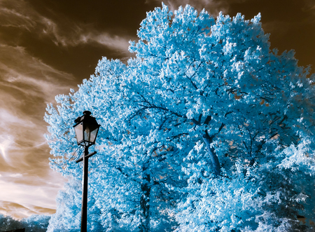 infrared: Beautiful tree in infrared view, nonreal colors