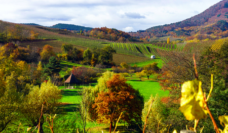 vinery: Beautiful landscape of alsacien hills with vineyards, seasonal concept