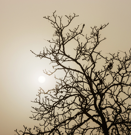 shadowgraph: Winter tree silhouette in great fog, natur concept