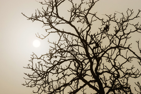 Winter tree silhouette in great fog, natur concept