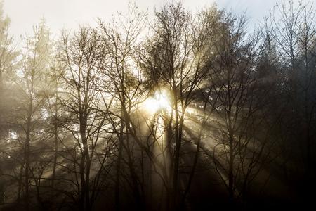 arboles blanco y negro: silueta del árbol de invierno en gran niebla, concepto natur