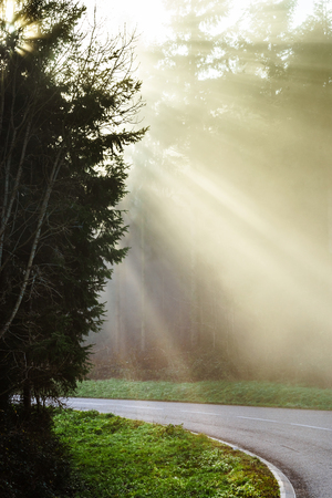 heed: Danger foggy road in the forest, autumn day Stock Photo
