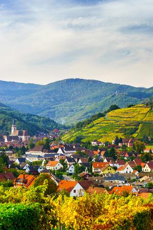 Beautiful colorful vineyards in Alsace hills, autumn Standard-Bild
