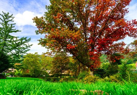 french countryside: Vivid colors of autumnal nature, red oak on the river, french countryside Stock Photo