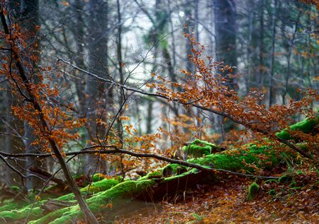 mistery: Beautiful forest view at winter time, season specific natural landscape