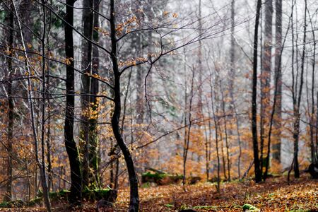 season specific: Beautiful forest view at winter time, season specific natural landscape