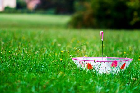 leaved: Leaved child umbrella on green grass, abstract loneliness concept