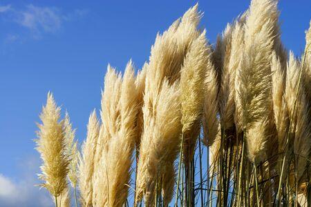 season specific: Downy spikes on the autumnal sun, season specific Stock Photo