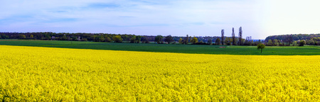 Beautiful wide panoramic view of colza field, tricolor, yellow, green, blue Stock Photo