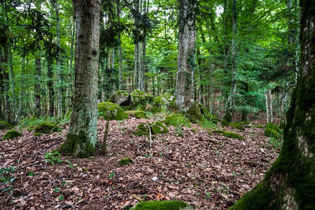 misterious: Deep wild forest with stones in Alsace, France