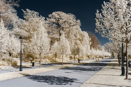Alley in public park, infrared view, Strasbourg Stock Photo