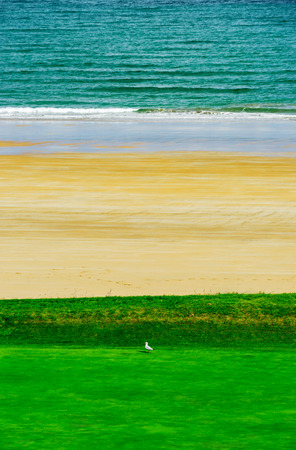 White gull on green grass near the sea, tricolor abstract picture, Brittany, France