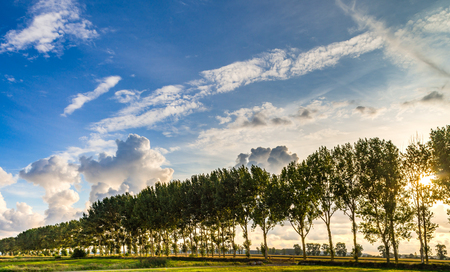 Beautiful sunlight through the trees, sunset time, Bretagne, France