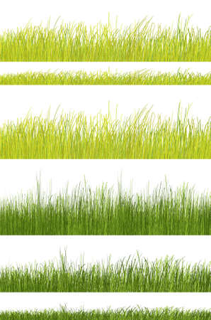 green grass pattern of natural color on white background Stock Photo - 4928128
