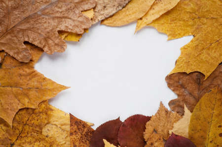 Frame from autumn leaves and place for text photo