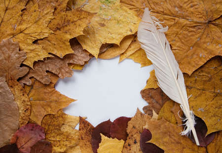 Frame from autumn leaves and goose quill Stock Photo - 5772877