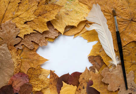 Frame from autumn leaves and goose quill,  black brush Stock Photo - 5772854