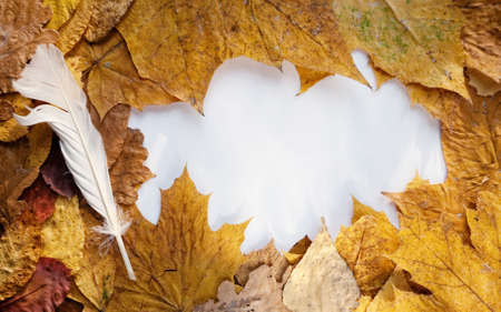 Frame from autumn leaves and goose quill photo