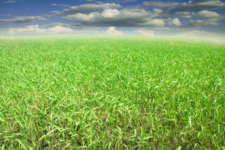 field of grass and perfect sky with clouds Stock Photo - 7039810
