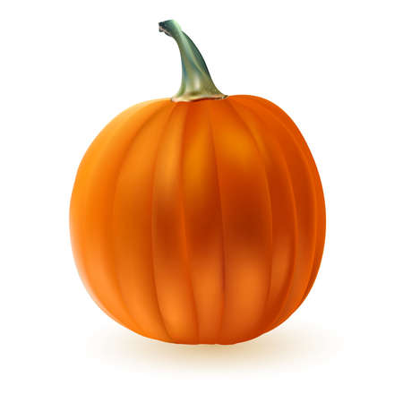 Ripe Pumpkin isolated on white. vector illustration Vector