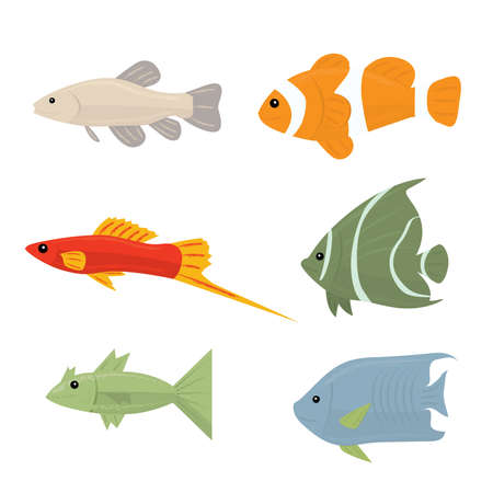 percula: Collection of tropical fish - set of vector icons Isolated on white background Illustration