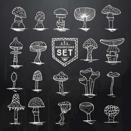sponge mushroom: Hand drawn mushrooms set on black chalkboard with wooden texture. Vector illustration. Design elements. Doodle sketch illustration in black and white color. Illustration