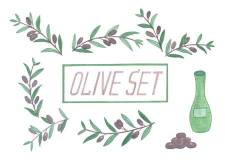 holly day: Set of watercolor olive branches. Isolated illustration on white background. Organic and natural concept.