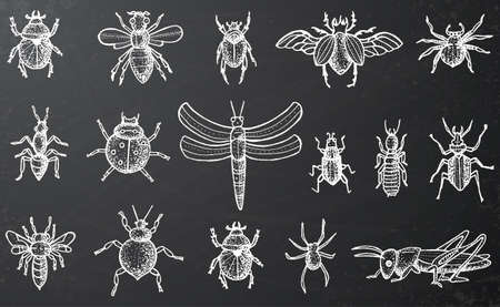 Insects set with bees and spiders on black chalkboard. Illustration