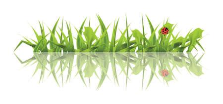白い背景に分離されたてんとう虫と春の緑の草。ベクトル図。 写真素材 - 97495106