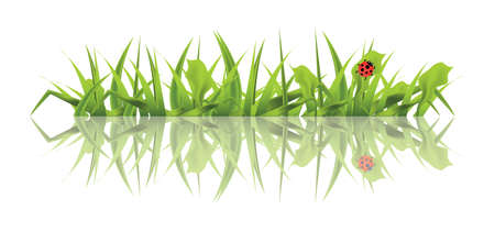 Spring Green Grass with Ladybug Isolated on White Background. Vector Illustration.