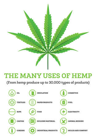 Industrial Hemp Infographic with Icons of Products. Vector Illustration. The Many Uses of Cannabis Vettoriali