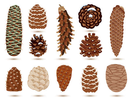 Set of Pine and Spruce Cones Isolated on White. Vector illustration. Botanical Collection.