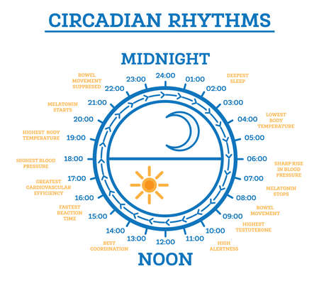 Circadian Rhythm. Vector Illustration. Scheme of Sleep Wake Cycle. Infographic Elements. Sunlight Exposure on Regulates Hormones Production. Processes Taking Place in Body During Day and Night.