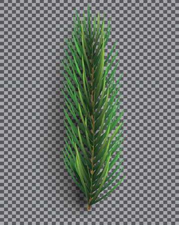 Fir Branch. Christmas Tree. Vector Illustration. Pine Sprig on Transparent Grid Background.