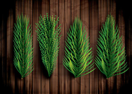 Fir Branches Set. Christmas Tree. Vector Illustration. Pine Sprigs on Wooden Background.