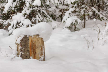 Wooden stump covered in snow.