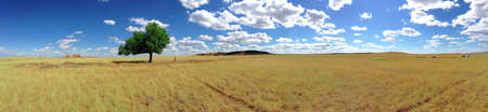 Panorama of a lonely tree in the middle of the steppe