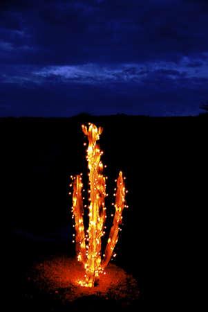 Tempo di esposizione Cactus incandescente con le luci di Natale la sera Archivio Fotografico - 4008325