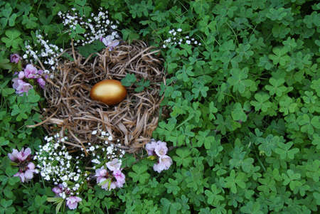 gniazdo jaj: ZÅ'ote jajecznych gniazdo  Zdjęcie Seryjne