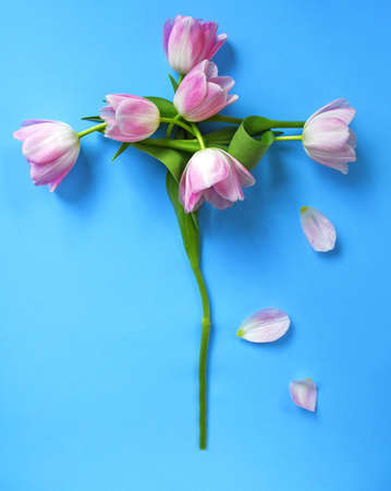 cross made of pink tulips on a blue background photo