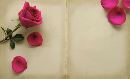 scroll border: Bright Pink Rose on paper that is over 100 years old Stock Photo
