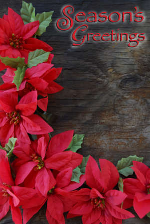Bright Red Poinsettia flowers on an old wood background.  Season's Greetings Christmas Card Banco de Imagens