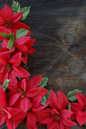 Bright Red Poinsettia flowers on an old wood background photo