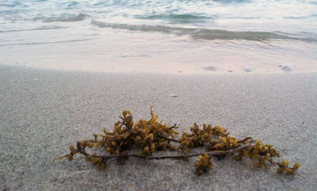 worthless: Worthless on the beach