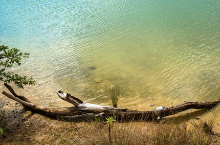 ageing: Dead tree lying on a lake