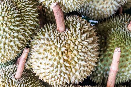 controversial: Durian fruit, King of fruits,  Southeast Asia as the king of fruits, Thai Fruits : Durian, the Controversial King of Tropical Fruits Stock Photo