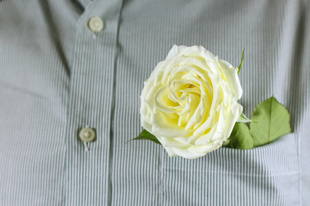 Close up white rose in the shirt pocket Stock Photo